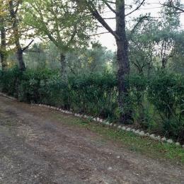 curadelverde.com-cura-del-verde-macerata-treeclimbing-potatura-alberi-alto-fusto-fruttiferi-alberi-da-frutto-olivi-viti-vigna-siepi-giardinaggio-tam1.15