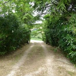 curadelverde.com-cura-del-verde-macerata-treeclimbing-potatura-alberi-alto-fusto-fruttiferi-alberi-da-frutto-olivi-viti-vigna-siepi-giardinaggio-tam1.16