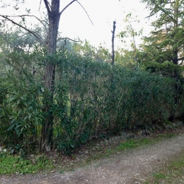 curadelverde.com-cura-del-verde-macerata-treeclimbing-potatura-alberi-alto-fusto-fruttiferi-alberi-da-frutto-olivi-viti-vigna-siepi-giardinaggio-tam1.17'