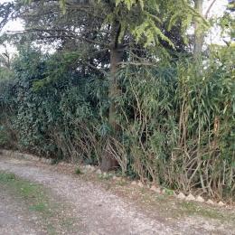 curadelverde.com-cura-del-verde-macerata-treeclimbing-potatura-alberi-alto-fusto-fruttiferi-alberi-da-frutto-olivi-viti-vigna-siepi-giardinaggio-tam1.17''