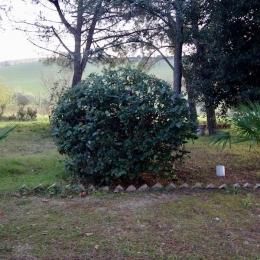 curadelverde.com-cura-del-verde-macerata-treeclimbing-potatura-alberi-alto-fusto-fruttiferi-alberi-da-frutto-olivi-viti-vigna-siepi-giardinaggio-tam1.21