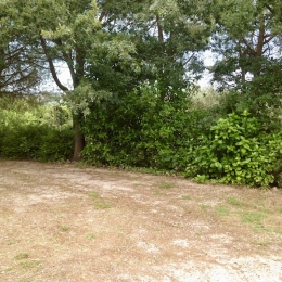 curadelverde.com-cura-del-verde-macerata-treeclimbing-potatura-alberi-alto-fusto-fruttiferi-alberi-da-frutto-olivi-viti-vigna-siepi-giardinaggio-tam1.8'