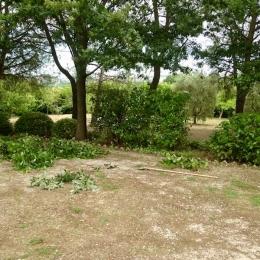 curadelverde.com-cura-del-verde-macerata-treeclimbing-potatura-alberi-alto-fusto-fruttiferi-alberi-da-frutto-olivi-viti-vigna-siepi-giardinaggio-tam1.9'