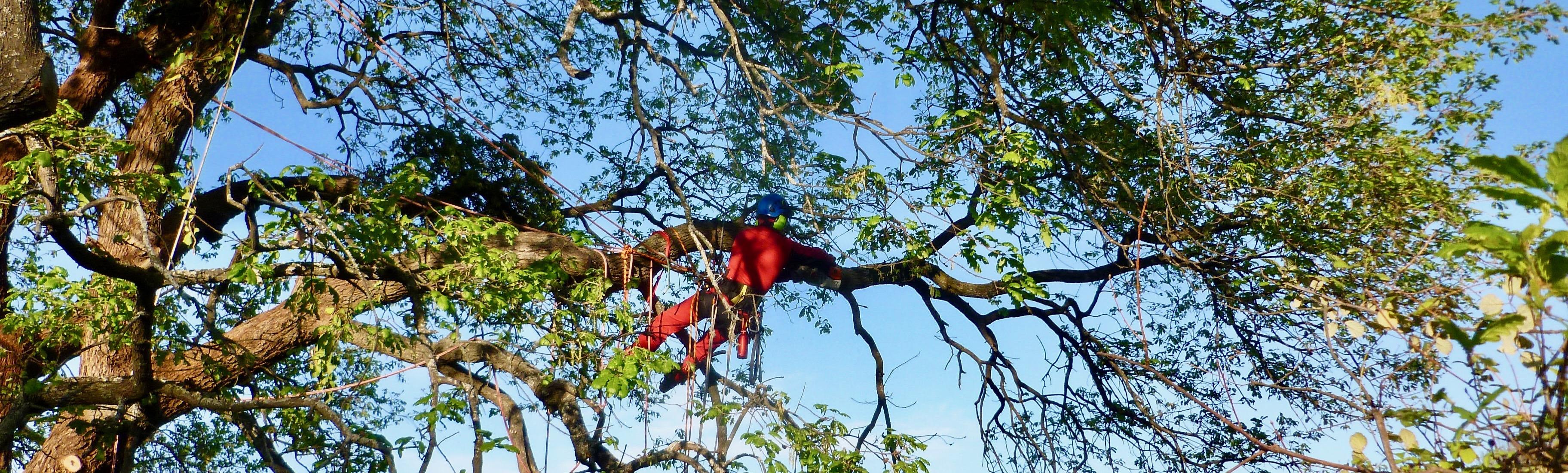 Alberi da frutto a crescita rapida immagine prodotto with for Alberi alto fusto da giardino